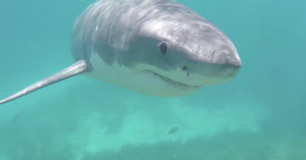 気づいたらホオジロザメが接近、、血の凍るような2分間
