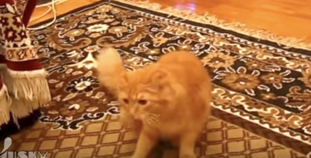 スーパーマリオのジャンプ音を聞くとジャンプしてしまう猫がかわいい笑