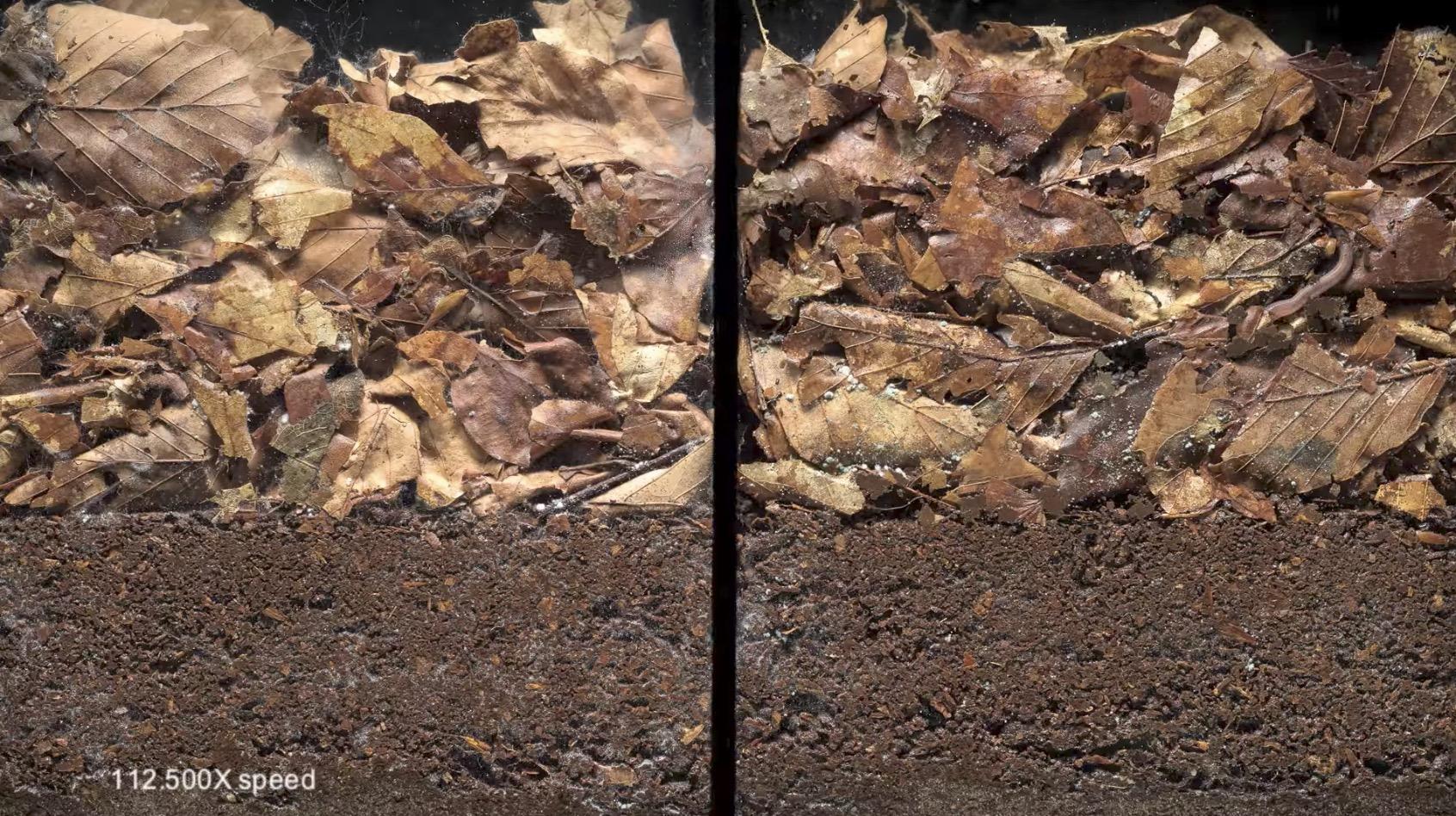 土壌にミミズなどがいる場合といない場合の堆積物の分解を比較した映像