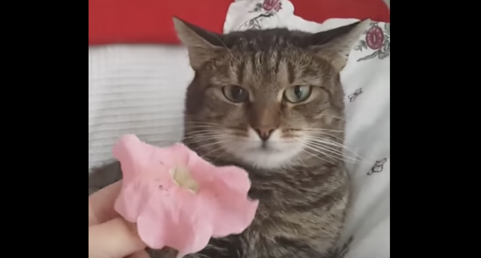 端正な顔立ちの猫。頭に花を乗せられた瞬間とんでもない顔になる^ ^;