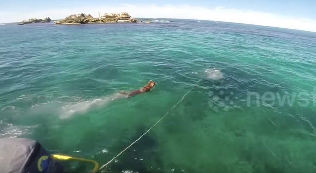 「友達になろうよ!」アザラシと遊びたくなった犬、海へジャンプ!