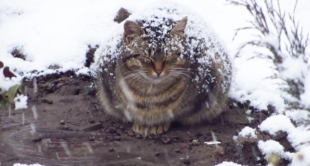 極寒の雪の中じっと丸まっていた野良猫。彼女のお腹には「新しい命」が宿っていた