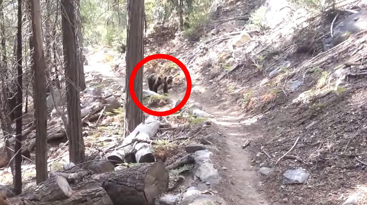 林道で前方から熊が!しかし男性の「適切な」対応で、道を譲ってくれた!
