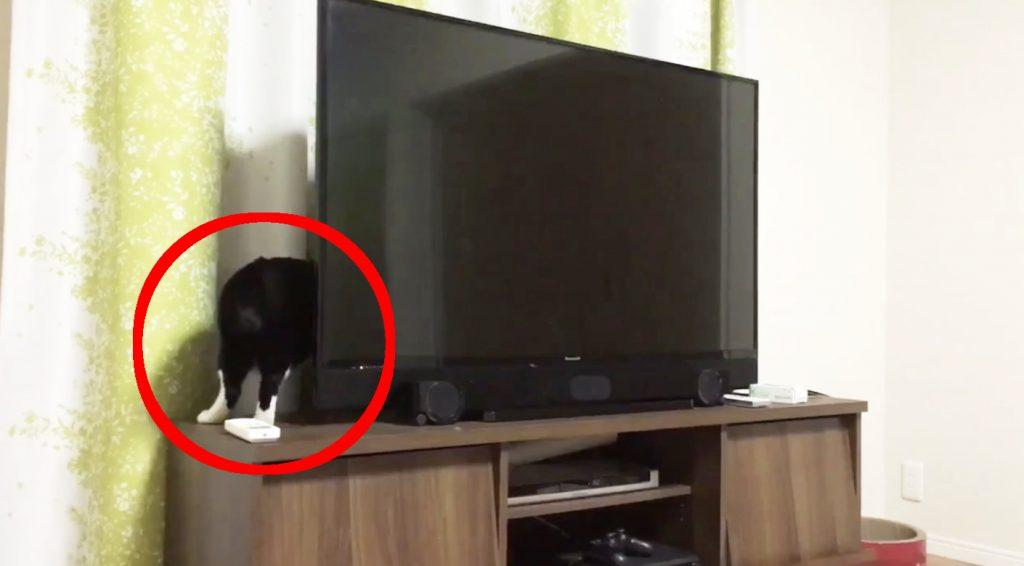 めちゃめちゃ胴体の長い猫の動画が話題に^ ^