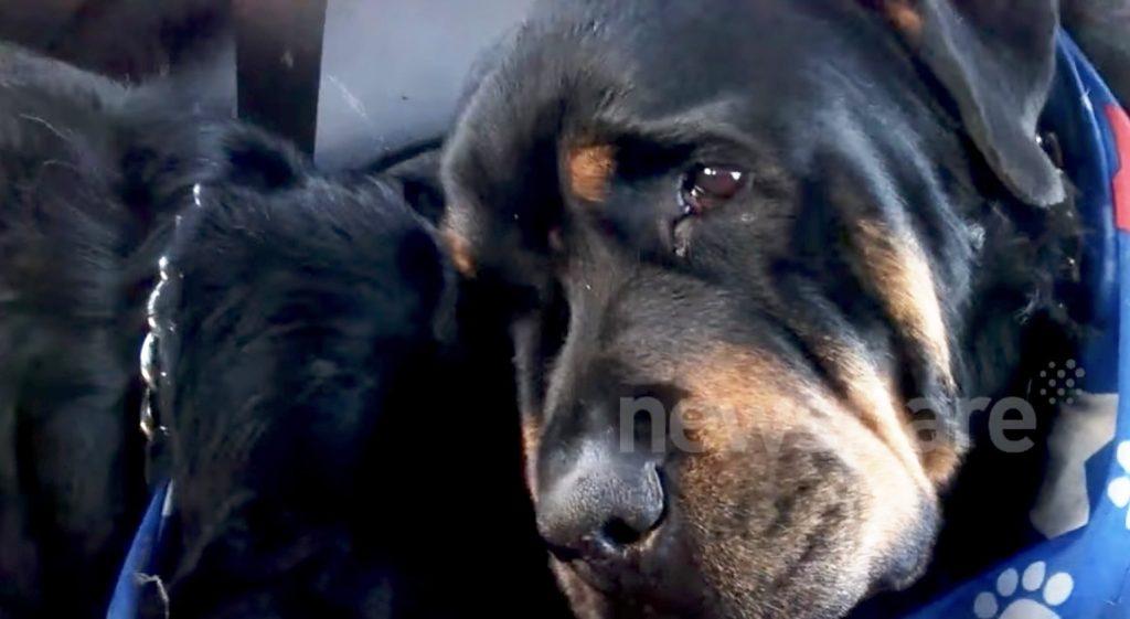 朝になっても目を覚まさなかった犬。親友は身を寄せ、涙を流していた
