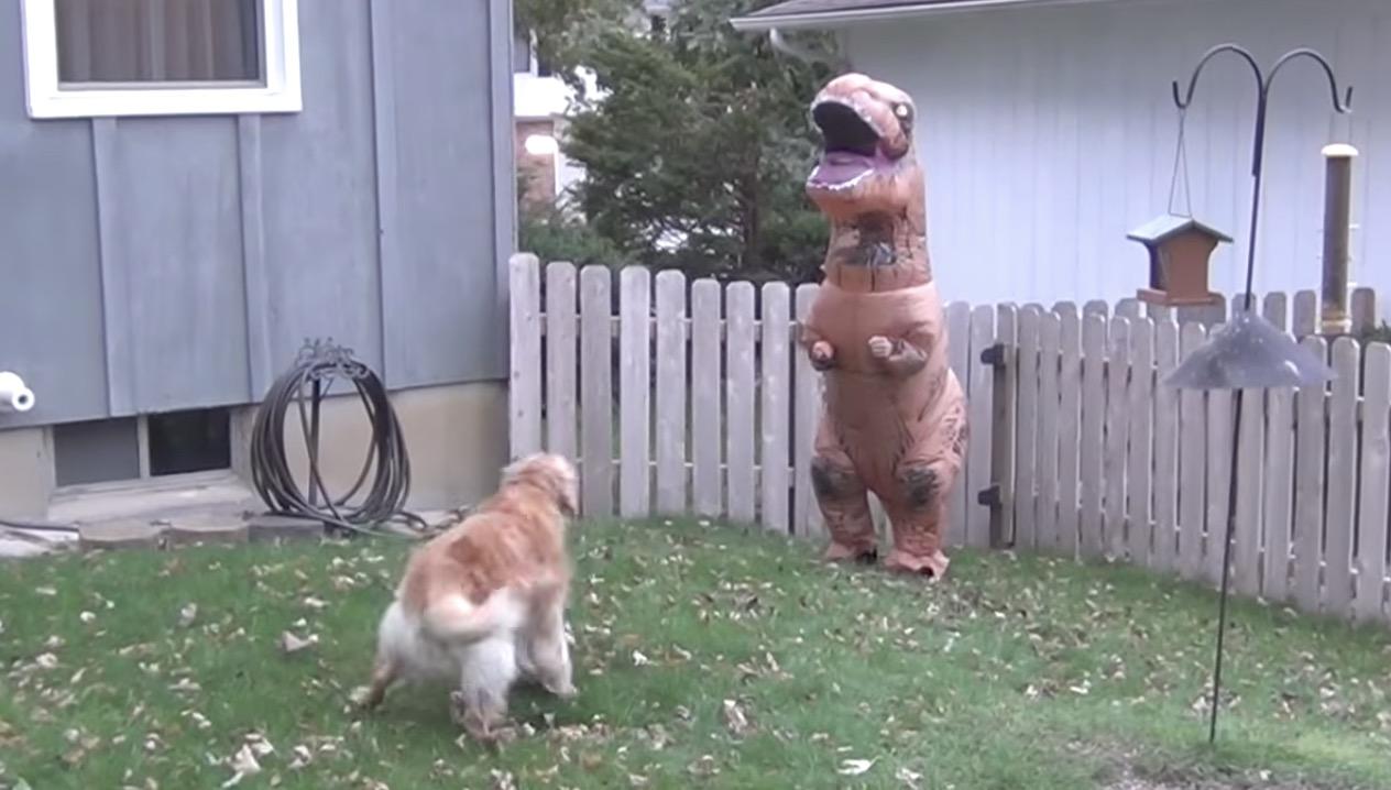 犬 vs 恐竜のバトル勃発!しかし中身が飼い主さんだと気づいてほっこりの展開に笑
