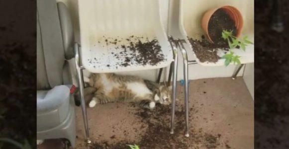 「いけない草」を食べてしまった猫、とてもリラックスした表情で発見される