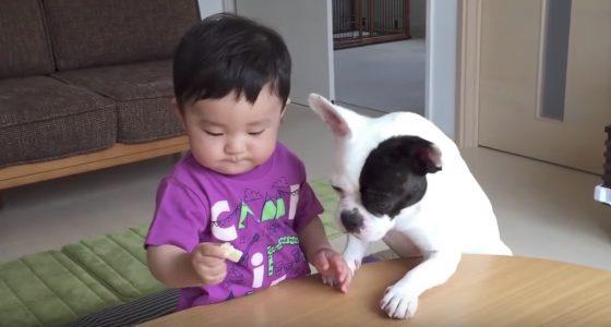 嫌な予感が、、(^ ^; 食い意地のはった犬と、お菓子を持った赤ちゃん