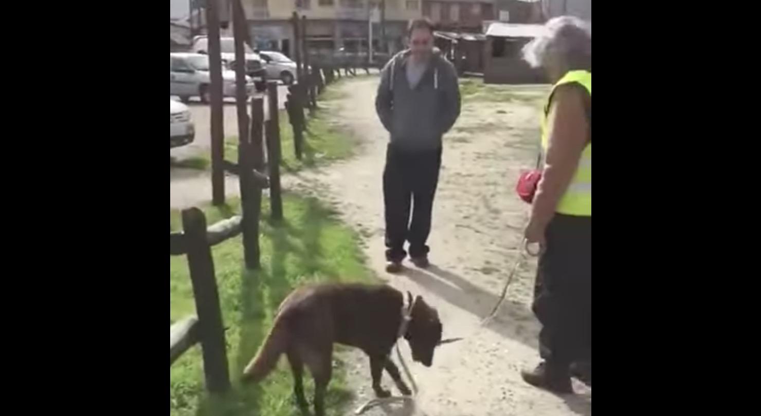 3年ぶりの再会だが飼い主さんに気づけなかった犬。しかし匂いを嗅ぐと、、!その反応に涙