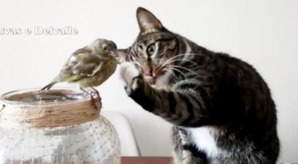 とても柔らかな手つきで小鳥を触れようとする優しい猫