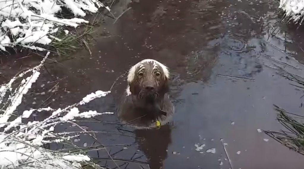 泥遊びが好きすぎる犬、いくら呼んでも真冬の泥沼から出てこない。。他の犬も困惑^ ^;