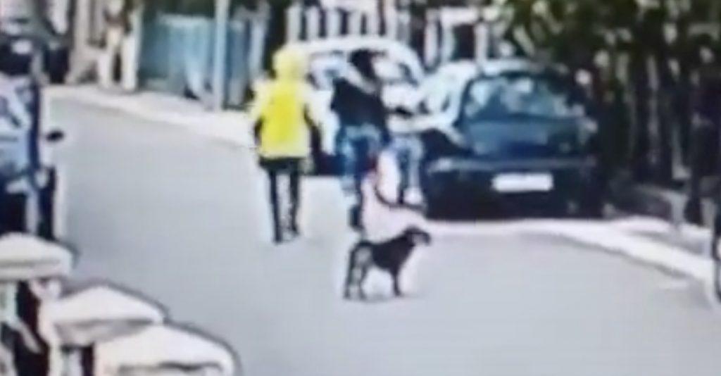 一匹の野良犬が強盗から女性を守る動画が話題に!