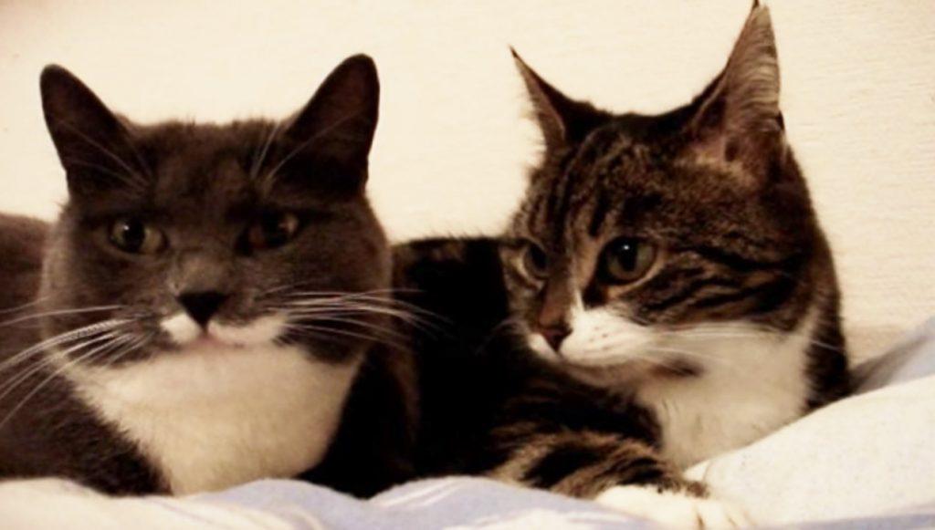 会話する二匹の猫。とても仲良しなのがよく伝わってくる!
