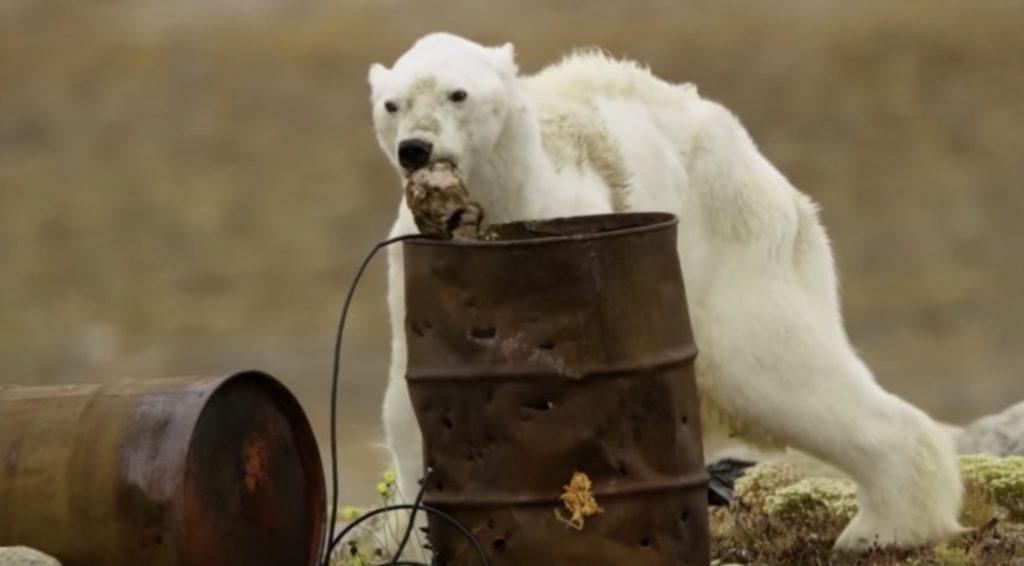 気候変動により飢えたホッキョクグマが、ゴミを漁り力尽きていく姿に胸が締め付けられる