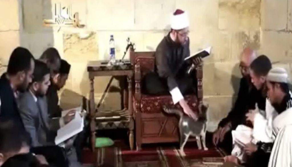 猫に宗教は関係ない。イスラムのモスクに現れた猫、聖典を読む指導者にもガンガン甘えまくる