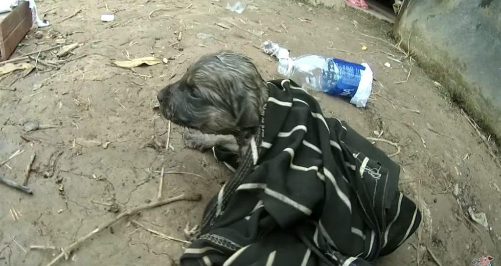 溺れて息をしていなかった子犬。しかし釣り人のナイスアイディアな「機転」が命を救う!