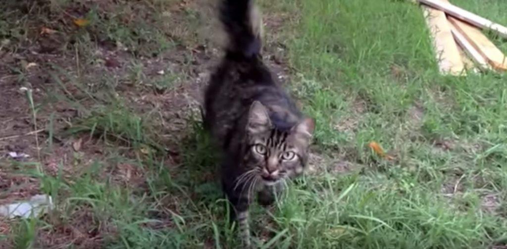 運転中、1年前に行方不明になり探し続けていた飼い猫と偶然の再会!猫の反応に涙