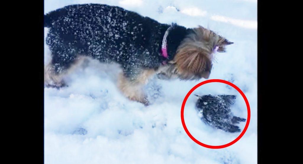 飼い犬が凍りかけて動かなくなった小鳥を発見。ドライヤーで温めると、、!