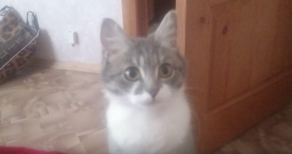 飼い主さんを何度も呼びに来る猫。付いていくと可愛い2匹が!