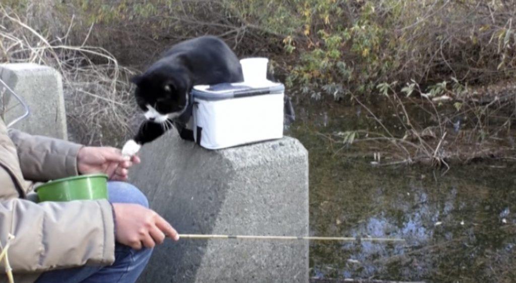 猫と一緒に釣りをすると、全然釣りに集中できないことがよくわかる動画笑