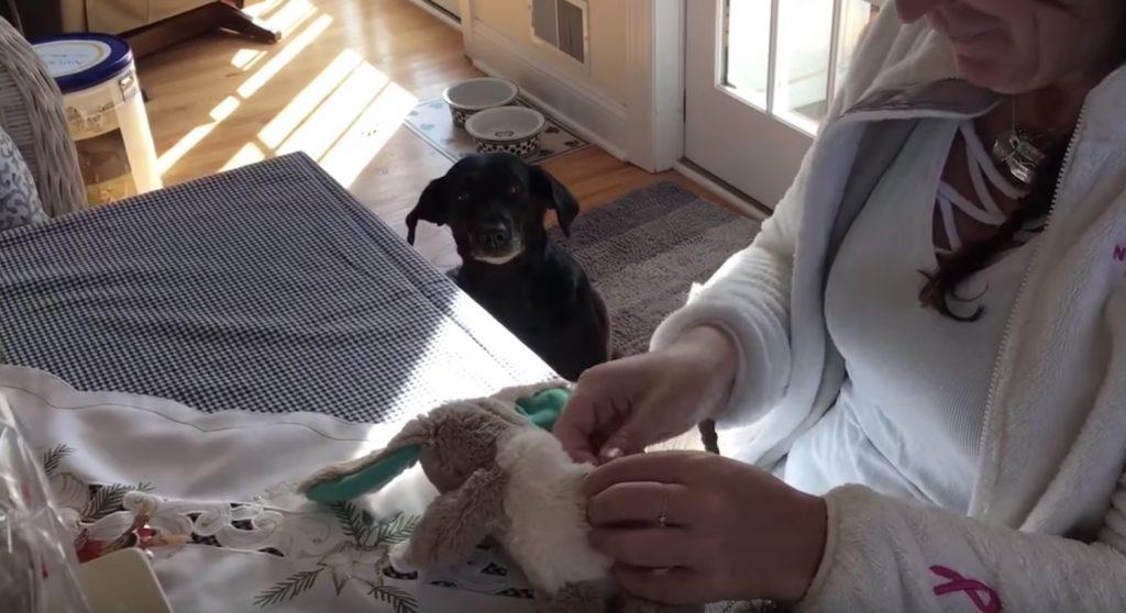 「友達を直してあげて!」壊れてしまった大好きな人形を持ってきた犬。修理を見守る姿がかわいい