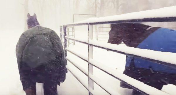 【爆笑】「外だ!」意気揚々と小屋から出た馬たち。しかしあまりの寒さにシンクロしすぎな行動に笑