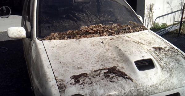 5年以上屋外に放置され汚れまくったスズキ・アルトワークス。高圧洗浄機で洗車したら見違える姿に!