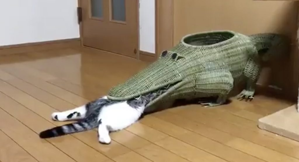 自らワニに食べられにいくお茶目な猫の動画が話題に^ ^;