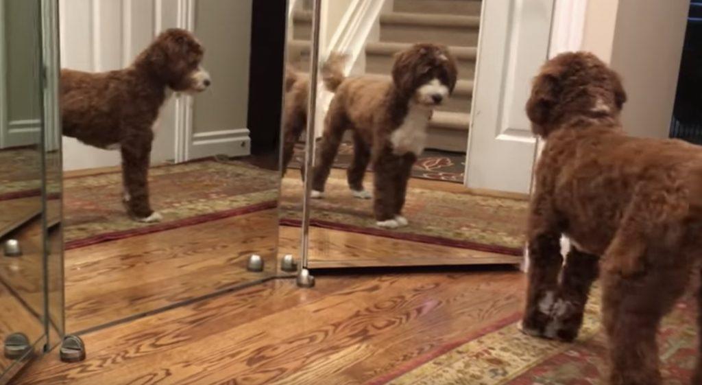 鏡と対面した犬のリアクションが可愛いと人気に!