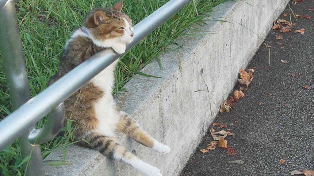 夕日に向かってウトウト気持ち良さそうにまどろんでいる猫が可愛い^ ^