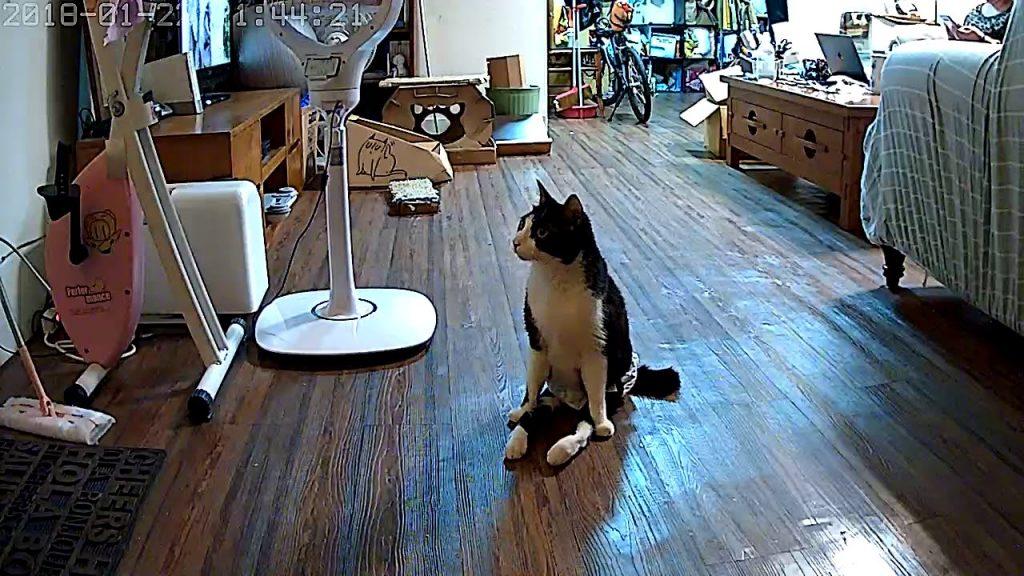 足が麻痺した猫。それでも飼い主さんの帰宅を喜び、玄関に迎えに行く健気な姿に心打たれる