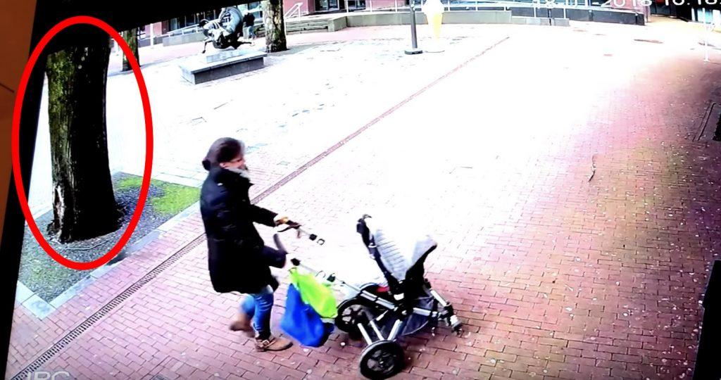 ベビーカーを押す女性。すると、街路樹が突然倒れてきた!