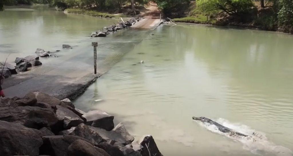 ワニがこんなに泳ぎが速いとは驚き!釣った魚を横取りしたクロコダイル