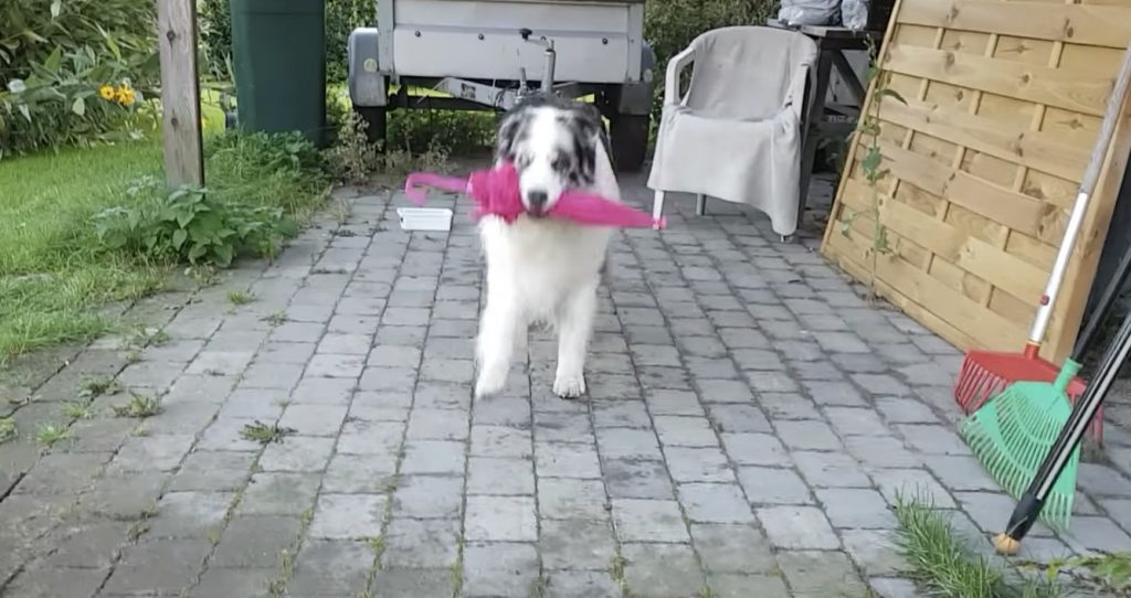 犬がスキップする動画が話題に!「初めて見た」「どうやって覚えた?」の声