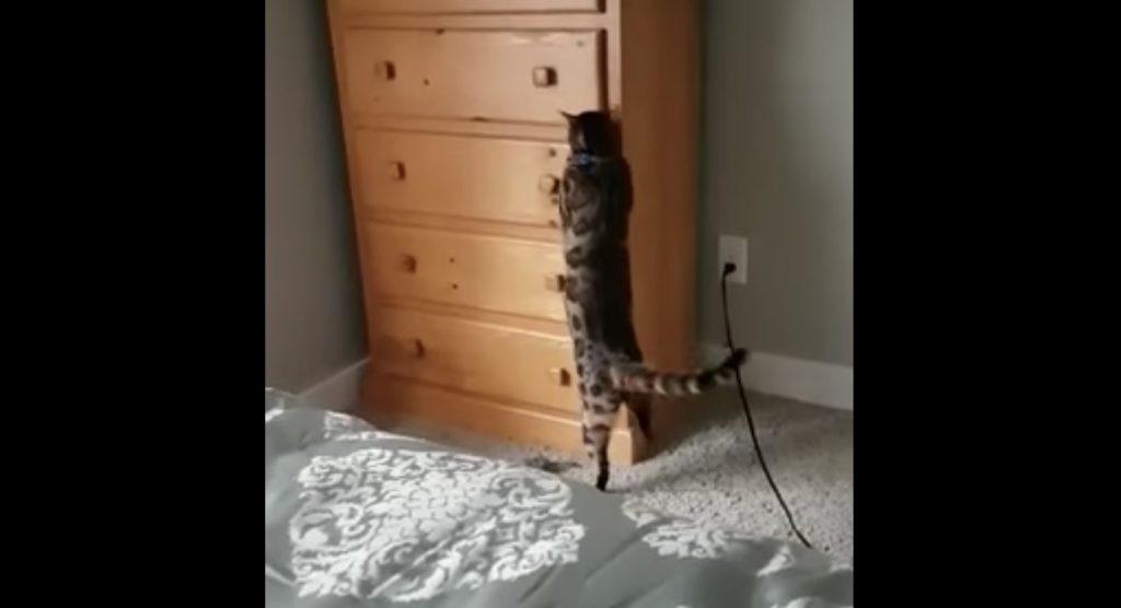 なんだこの猫!自分でタンスに閉じ込もる猫^^;