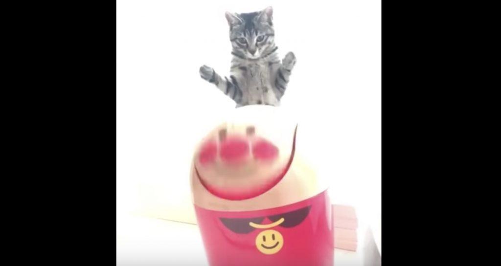 猫に「顔」を猫パンチされ、回りまくるアンパンマンが海外で話題に笑