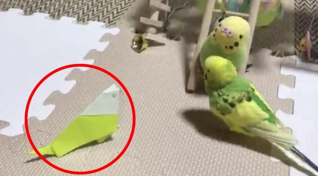 本物のインコに折り紙のインコを作ってあげたら、一撃で瞬殺された笑