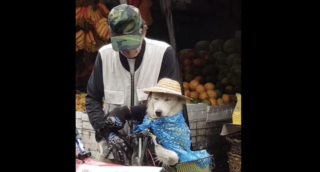 突然の雨、おじいさんと犬の絆を感じる素敵な場面が目撃され話題に^ ^