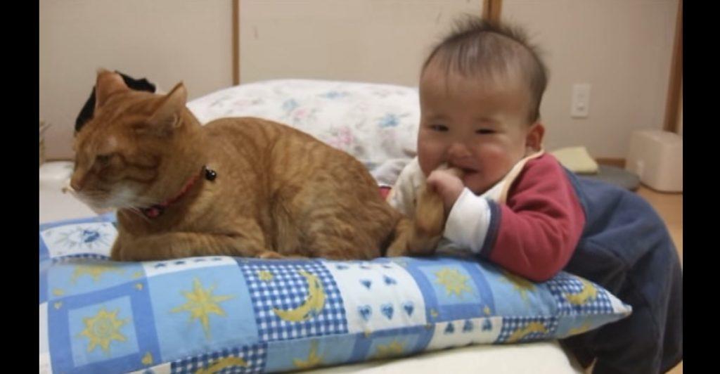 赤ちゃんに尻尾を噛まれた猫。思わず鳴くほど痛いのに、優しいリアクションを返してきた^ ^