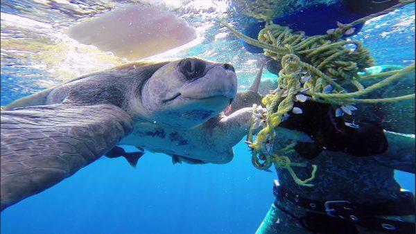 「助けてくれてありがとう」絡まったロープを外してくれたダイバーと一緒に泳ぐウミガメ