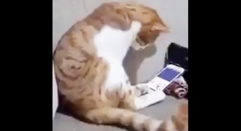 スマホに映った、亡きご主人を観た猫の反応に胸が締め付けられる