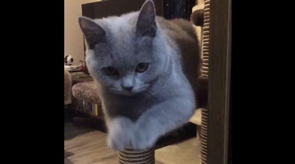 何かのおまじない?!変な「儀式」をする猫が人気に^ ^