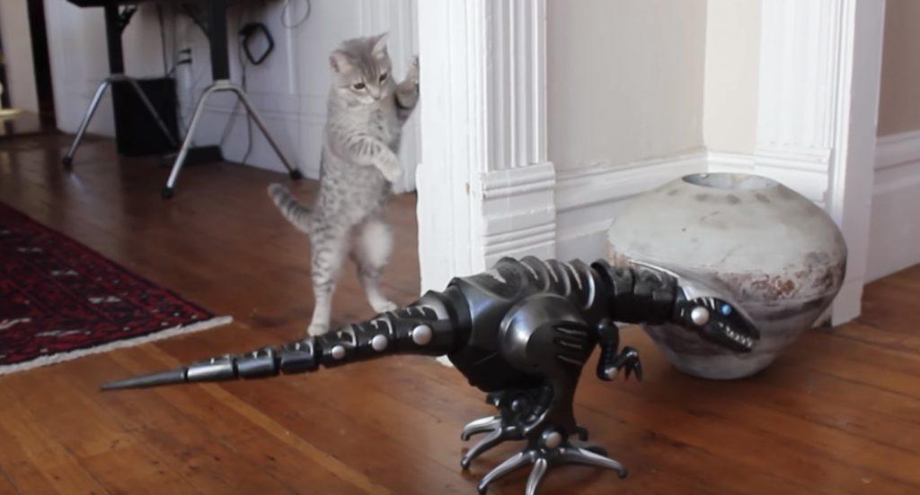 猫 vs 恐竜ロボット!猫の仕草が何とも言えず可愛い^^