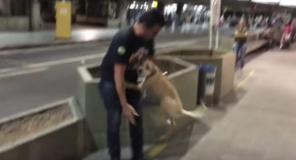 飼い主さんと10日ぶりの再会。テンションMAXの犬の姿に他のお客さんも思わず笑顔に^^