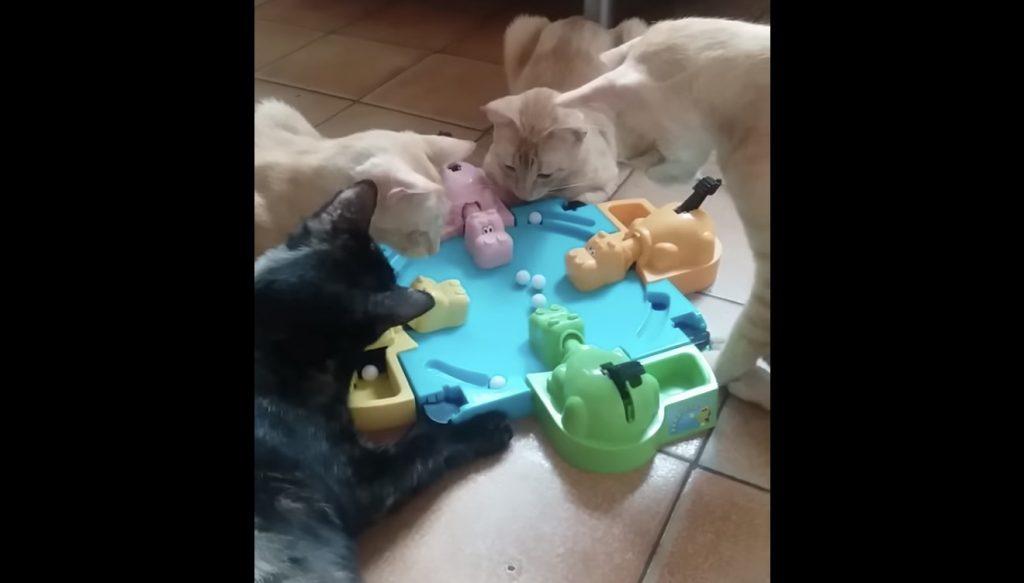 ゲームに熱中する猫たち。とても賢いなぁ