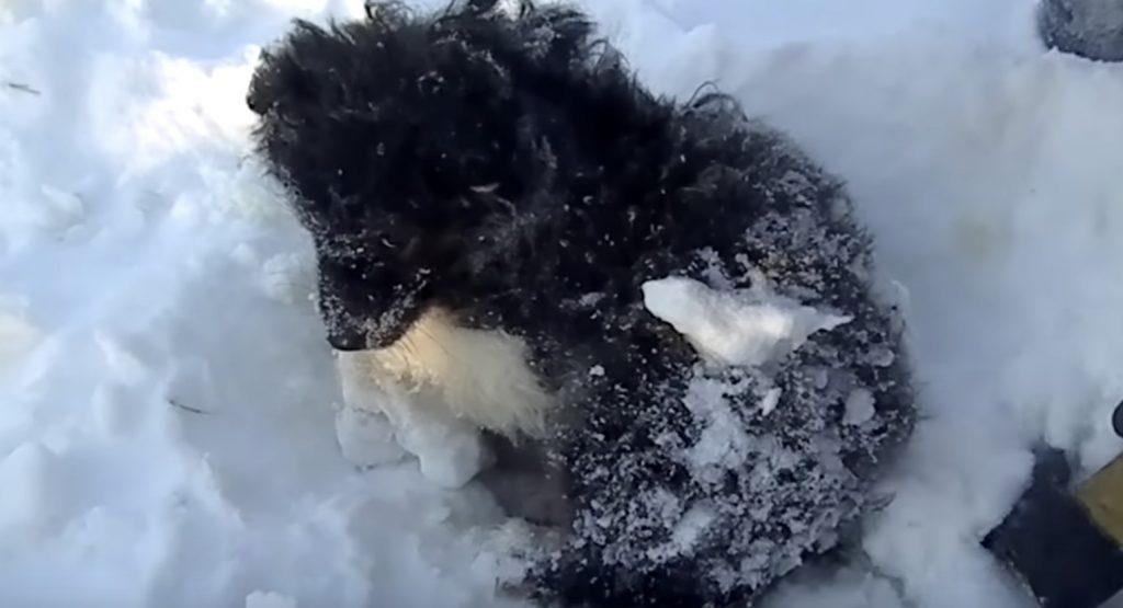 どうしてこうなったんだろう。。雪に埋まって凍りかけていた子犬を救助!