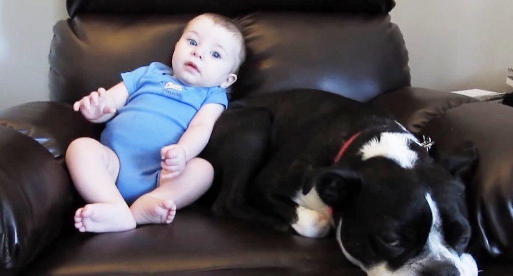 赤ちゃんがウンチをお漏らしした瞬間の犬のリアクションに爆笑