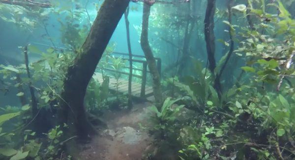 7年に一度「水中の森」が生まれる。ブラジルで撮られた神秘的な水中散歩映像!