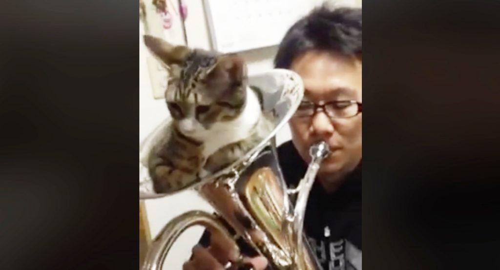 金管楽器にすっぽりハマった猫。そのまま吹いたら可愛いリアクションをした笑