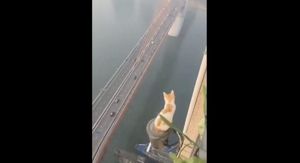 地面が霞んで見えるほどの高層階。怖すぎる場所でくつろぐ猫が撮影される